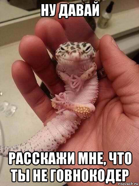 gekkon-nudavay_113566903_orig_